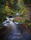 Wyming Brook in Autumn by Richard Hall
