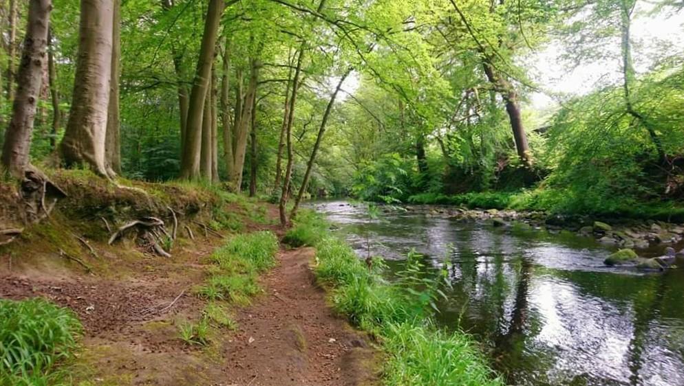 Don in Beeley Wood near Oughtibridge by Howard Bailey