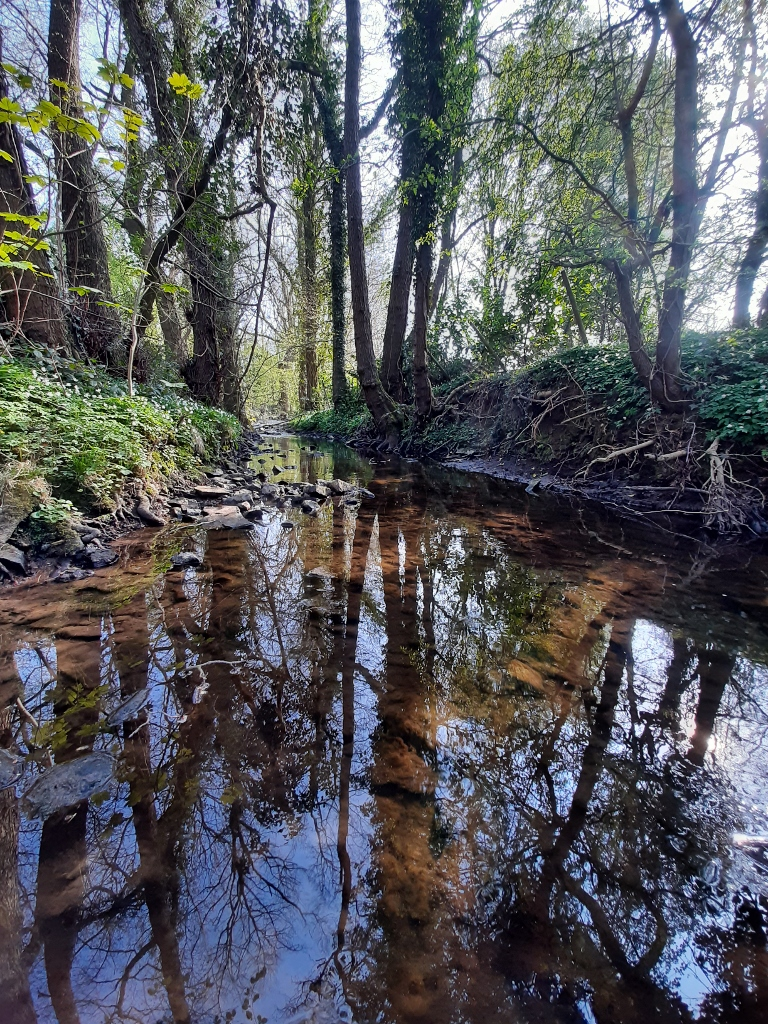 Again, taken along Redleadmill Brook in Wingerworth, the nearest point from my home to the River Don river system. by Barry Caldwell