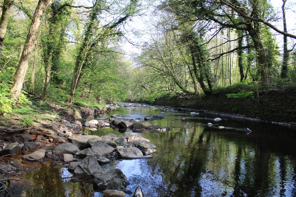 River Don in Beeley Woods  by Joleen White & Peter Aldred