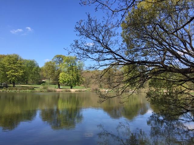 Ringwood Lake, Hollingwood, Chesterfield by Roz Nunn