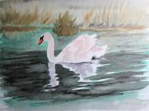 """""""Swan on the River Dearne"""" by Helen Smyly"""